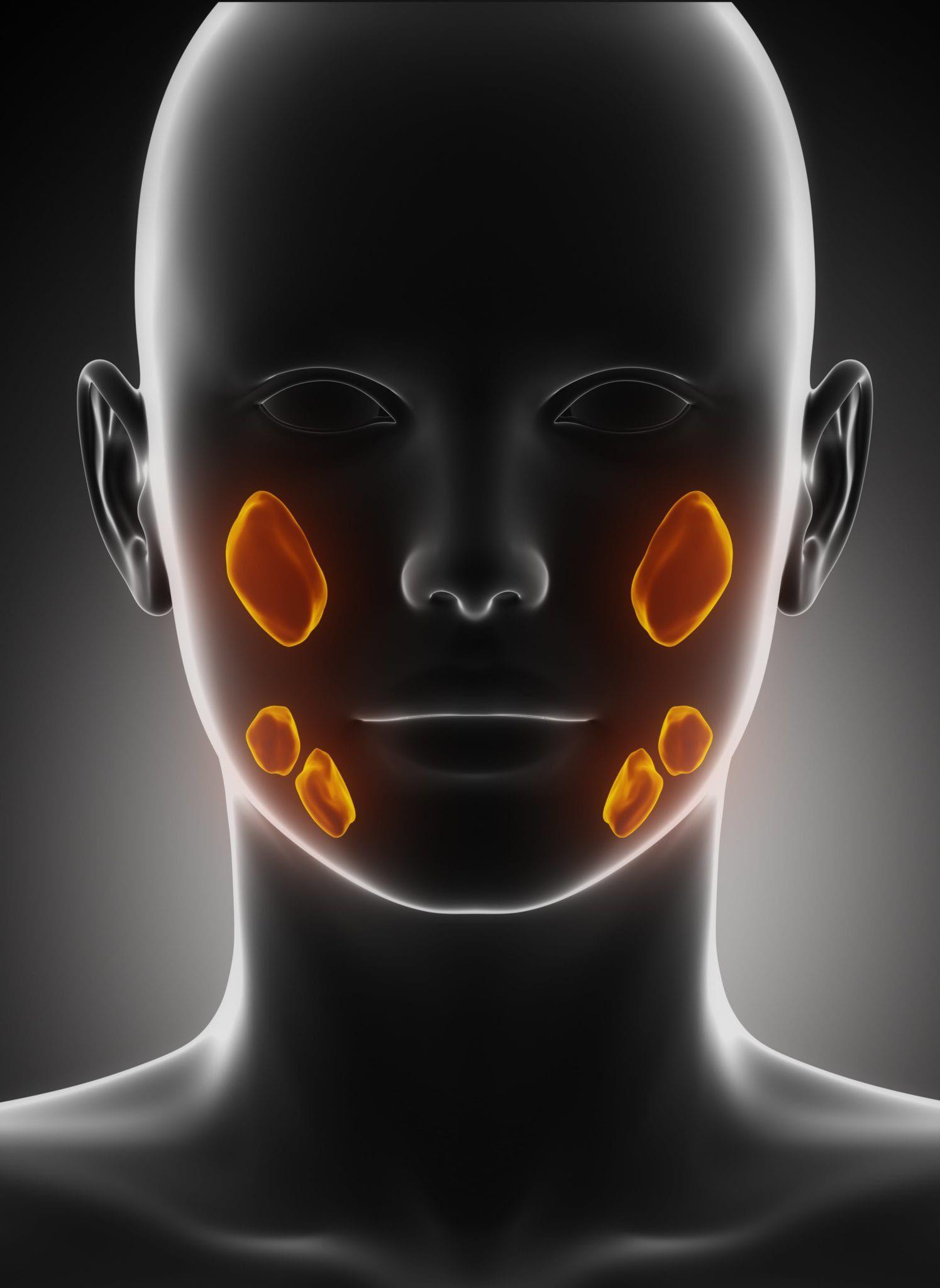orange salivary glands on black outline of face
