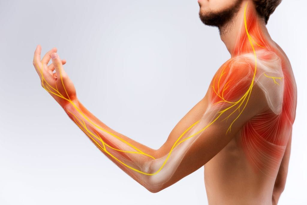 nerve shown running down from spine into the arm to the fingers